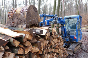 forestry nvq